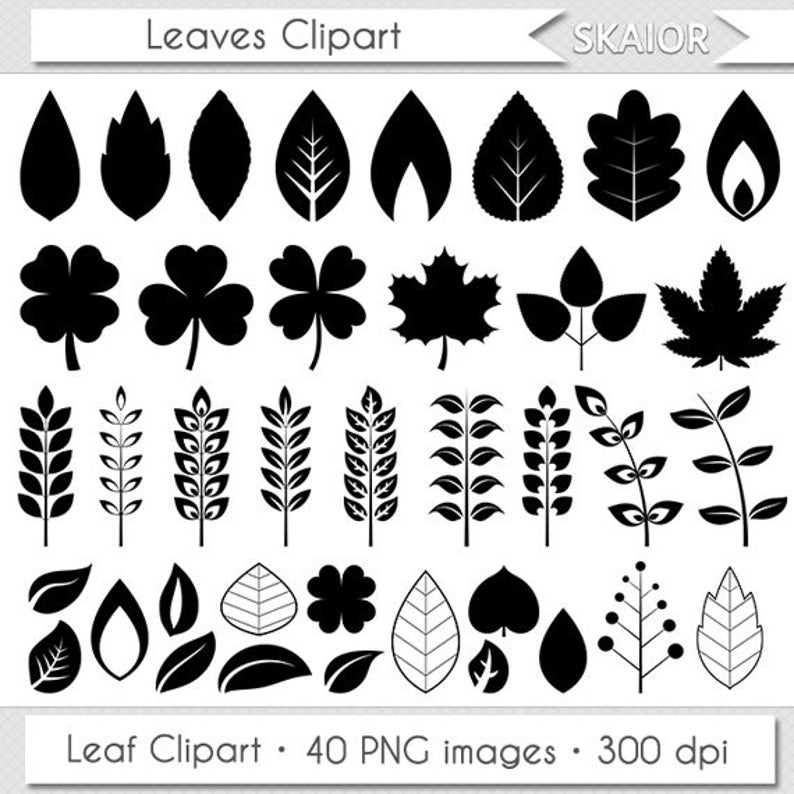 Leaves clipart vector. Digital clip art leaf