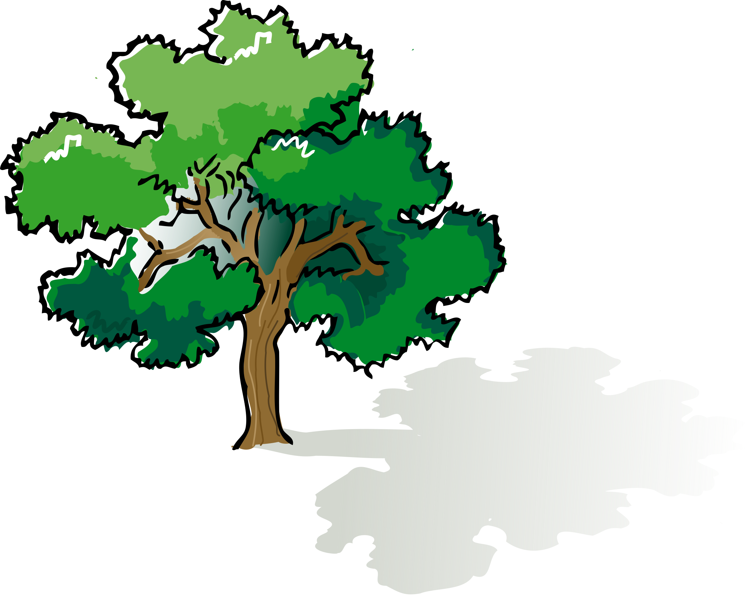 Colored oak big image. Color clipart tree