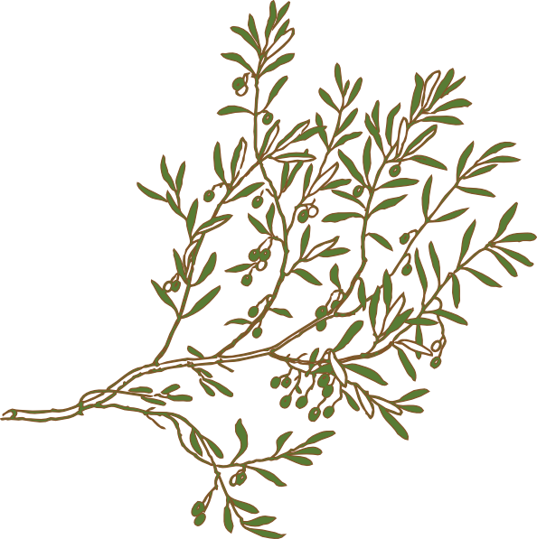 Branch clip art at. Leaf clipart olive tree