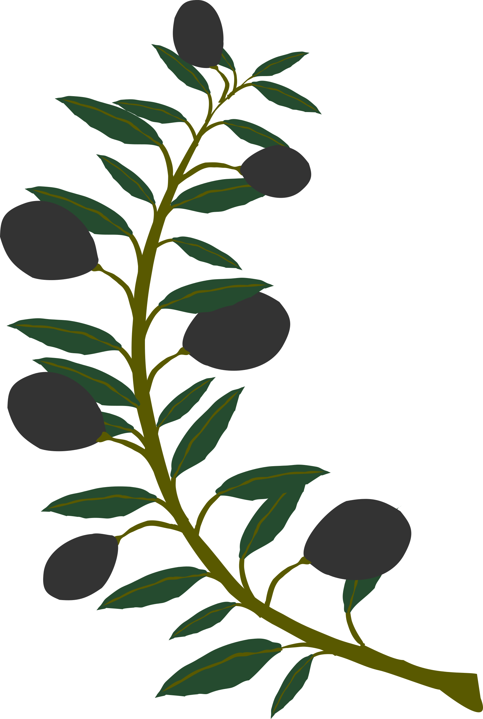 Leaf clipart olive tree.  collection of branches