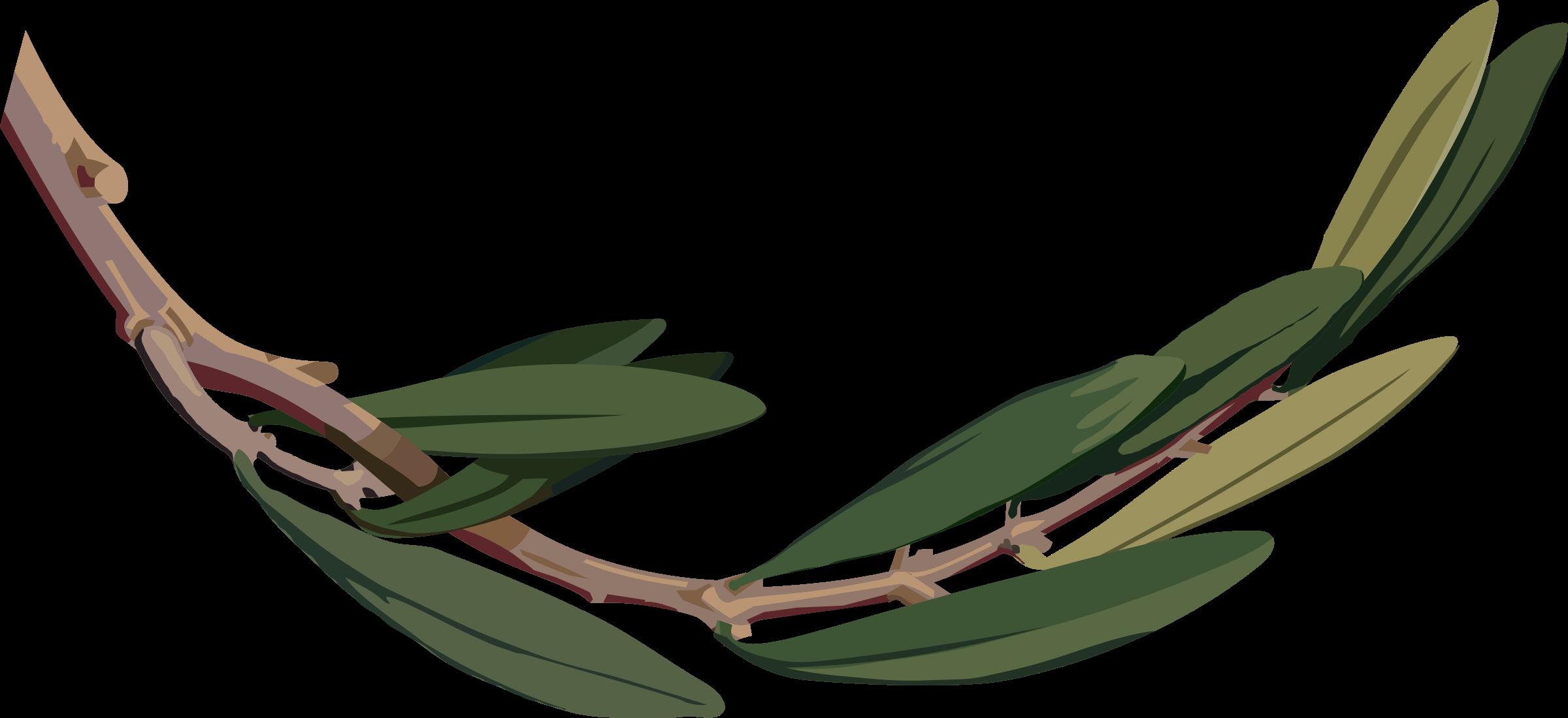 Leaf clipart olive tree. Branch big image png