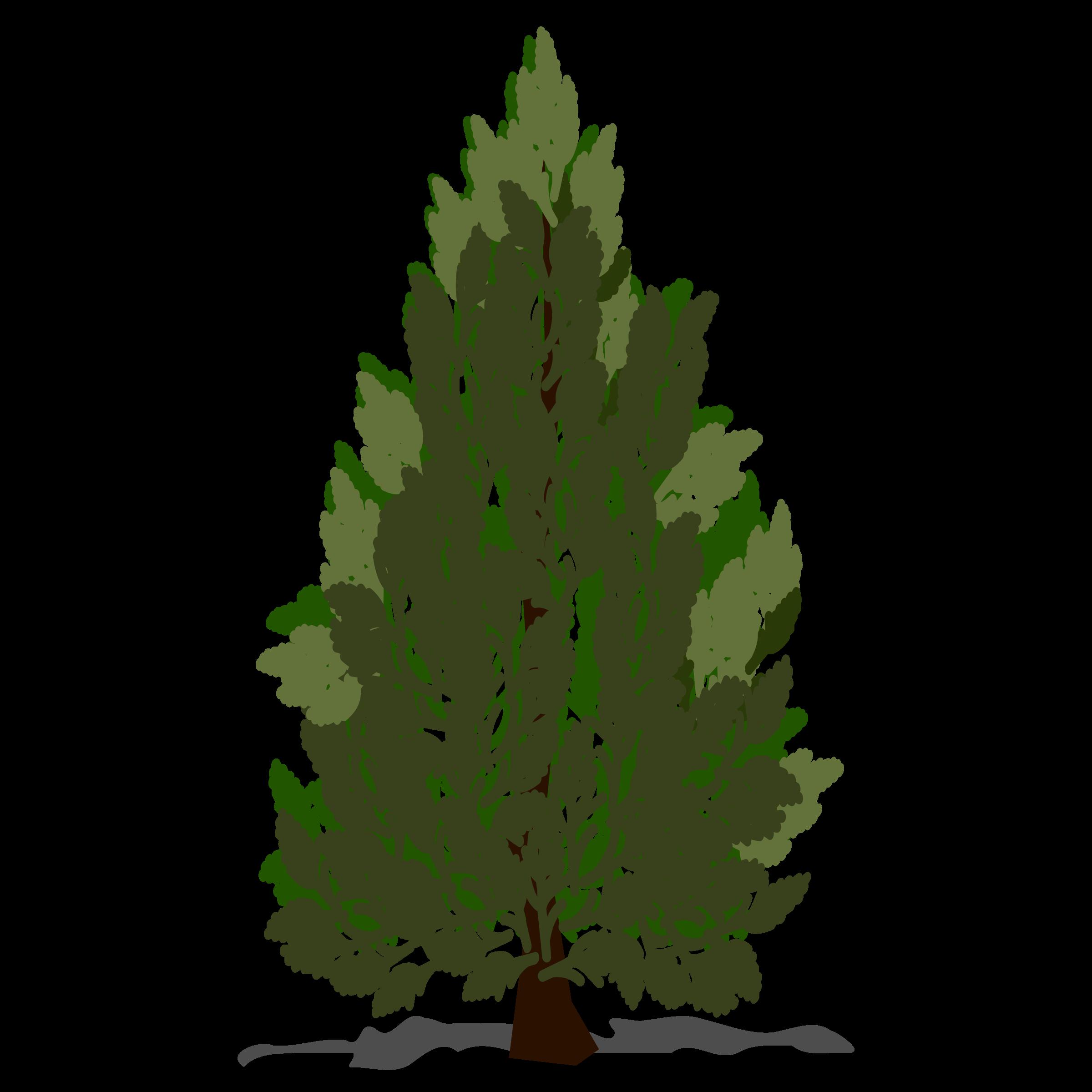 Leaf clipart pine tree. Big image png
