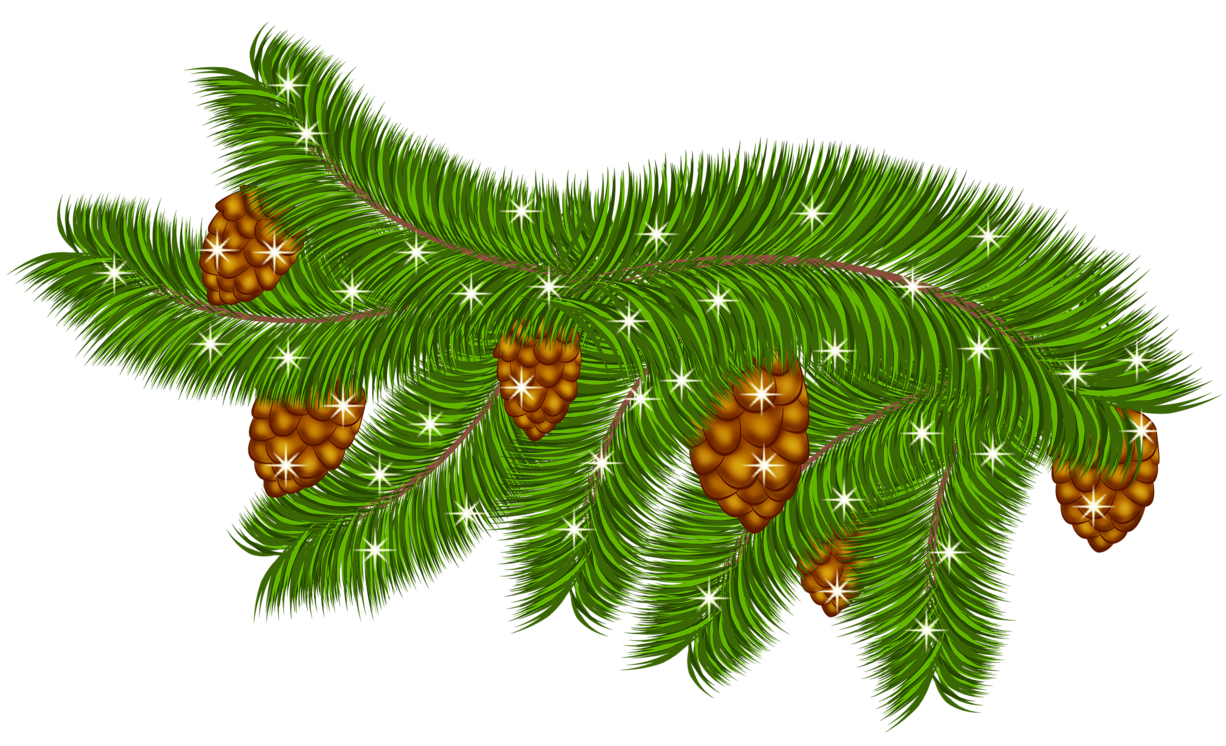 Transparent branch with cones. Leaf clipart pine tree