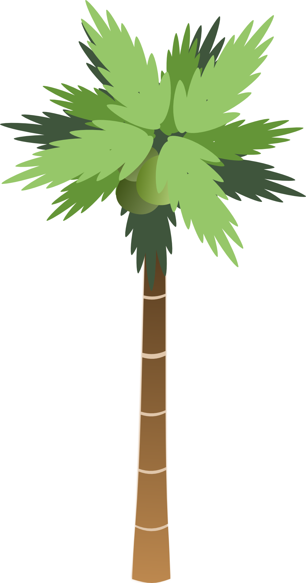 Palm png images download. Tree clipart base