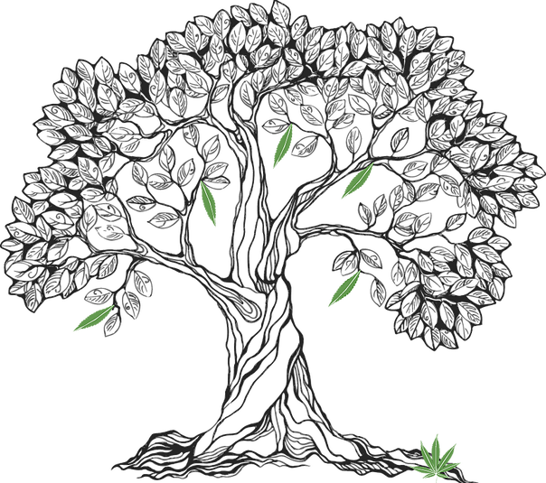 Clipart leaf pipal. Bodhi tree drawing at