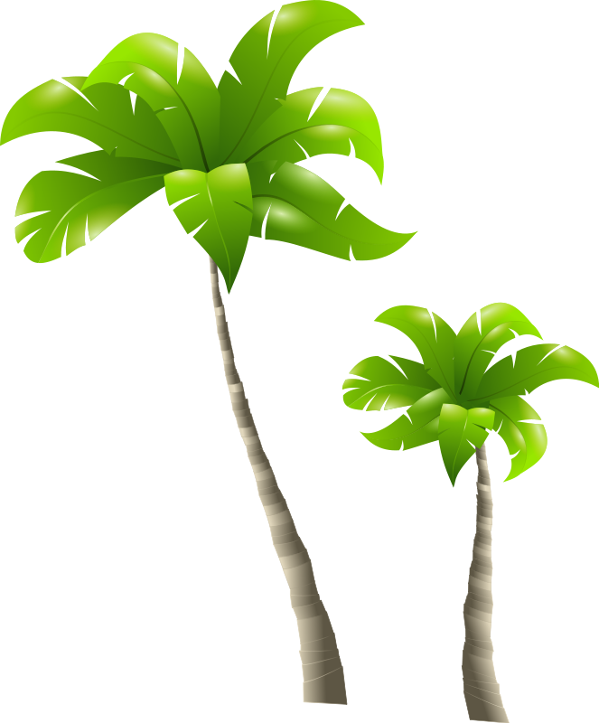 Clipart leaf pipal. Palm tree png images
