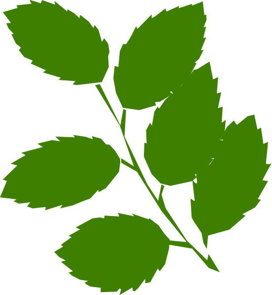 Clipart leaf pipal. Peepal images real and