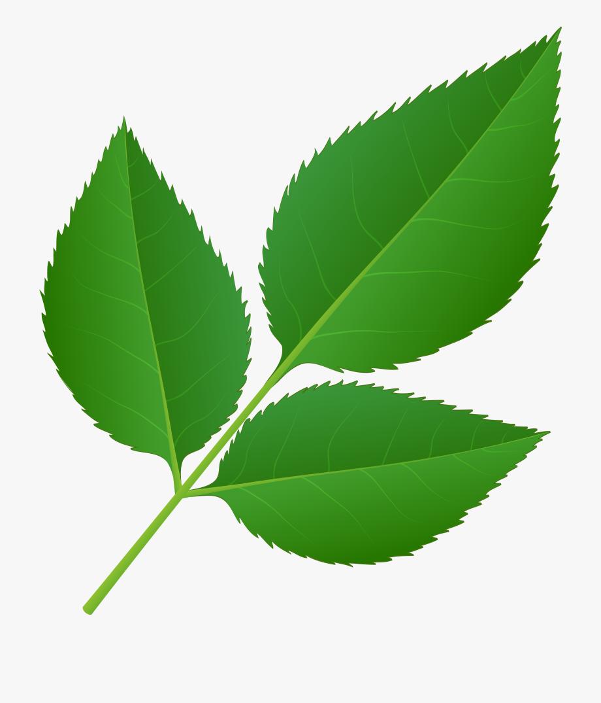 Rose clipart leaf. Leaves of stem transparent