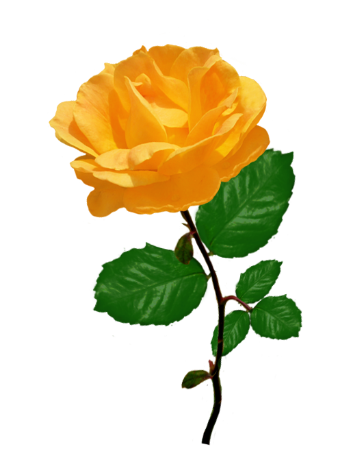 Red orange with leaves. Rose clipart leaf