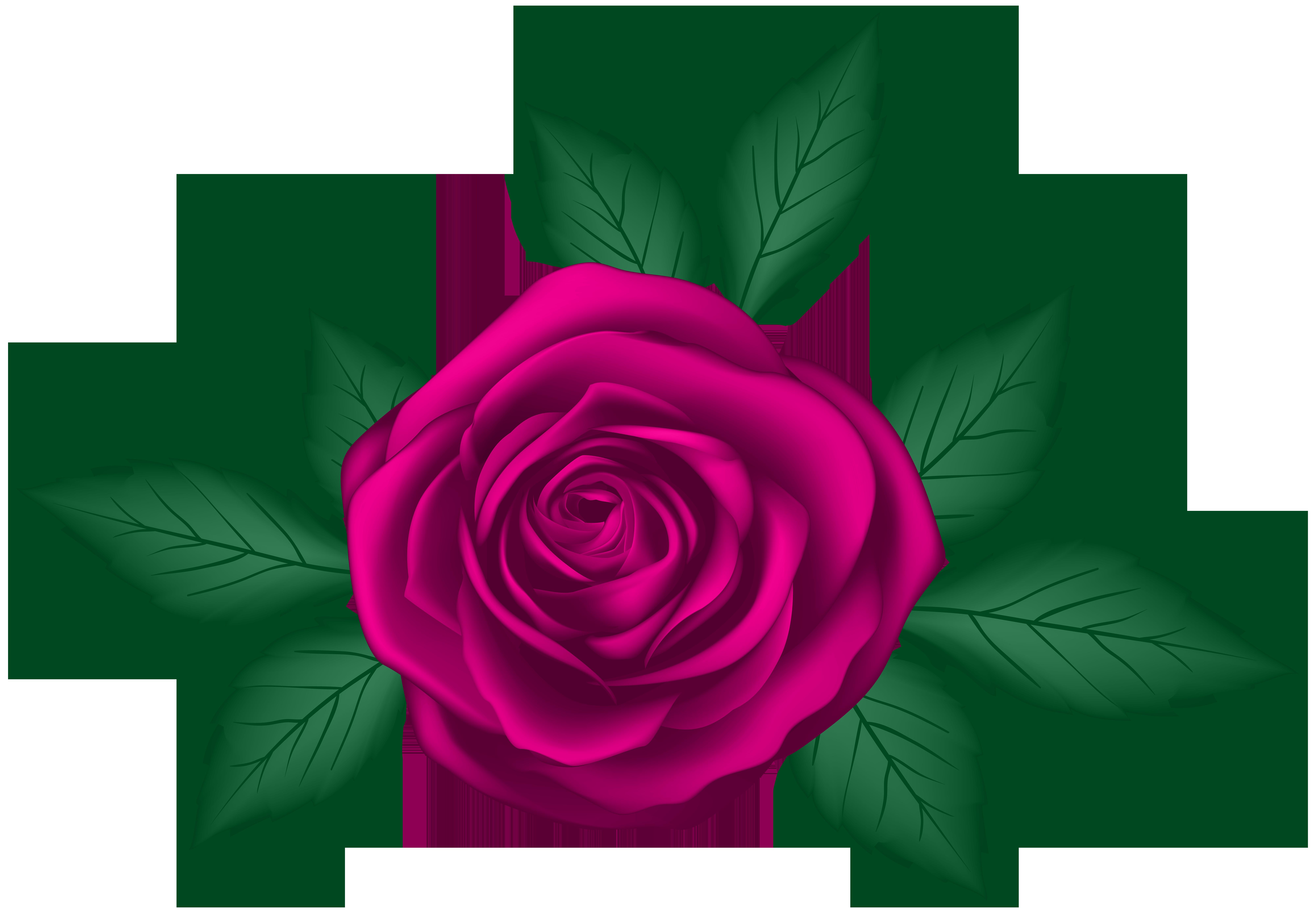 Rose transparent png clip. Clipart roses leaf