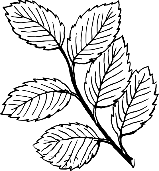 collection of high. Rose clipart leaf