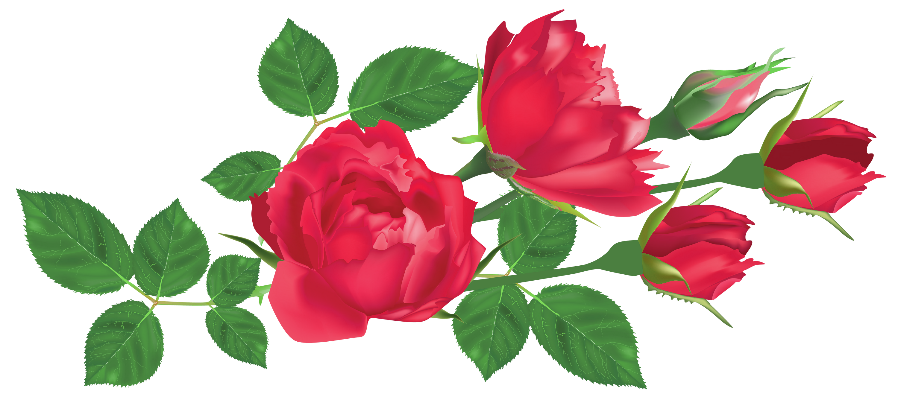 Transparent red roses png. Rose clipart leaf