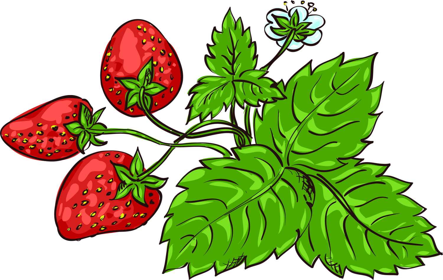 Strawberries clipart strawberry plant. Fragaria viridis aedmaasikas clip