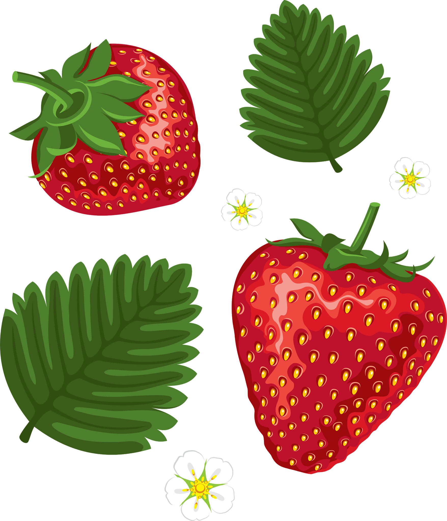 Strawberries clipart leaf. Pin by pngsector on