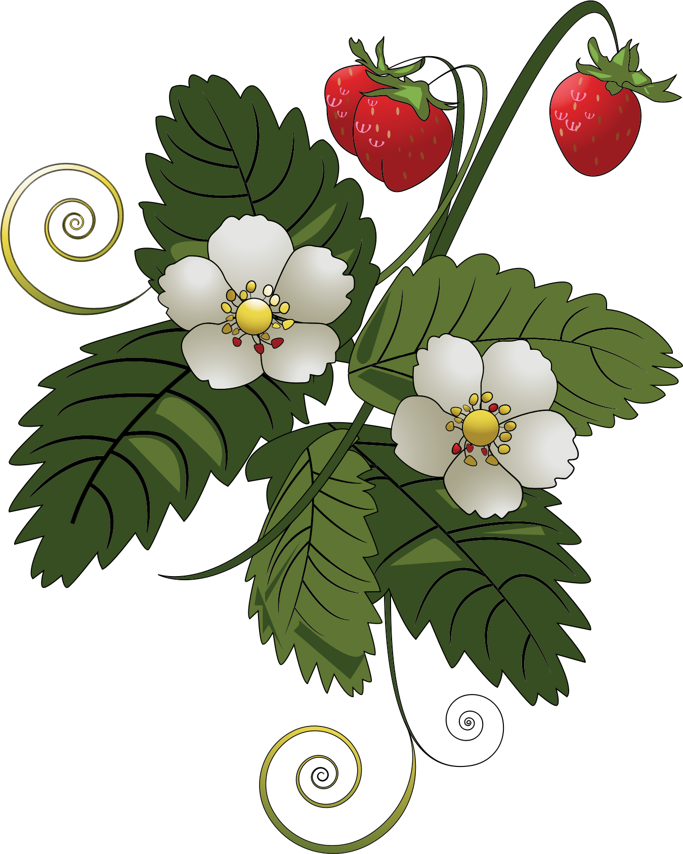 Big image png. Strawberries clipart strawberry plant