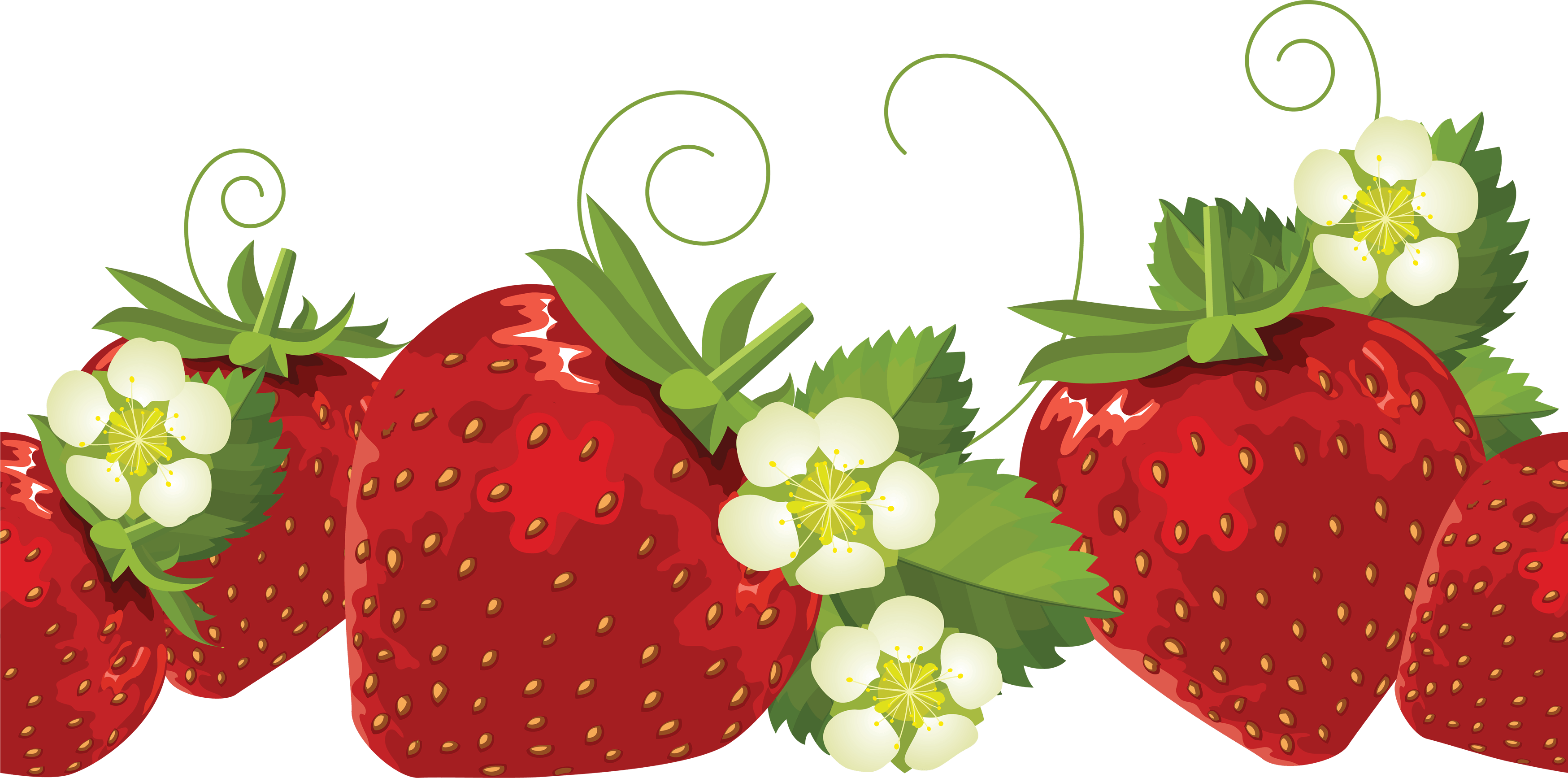 Free leaf cliparts download. Strawberries clipart strawberry leave