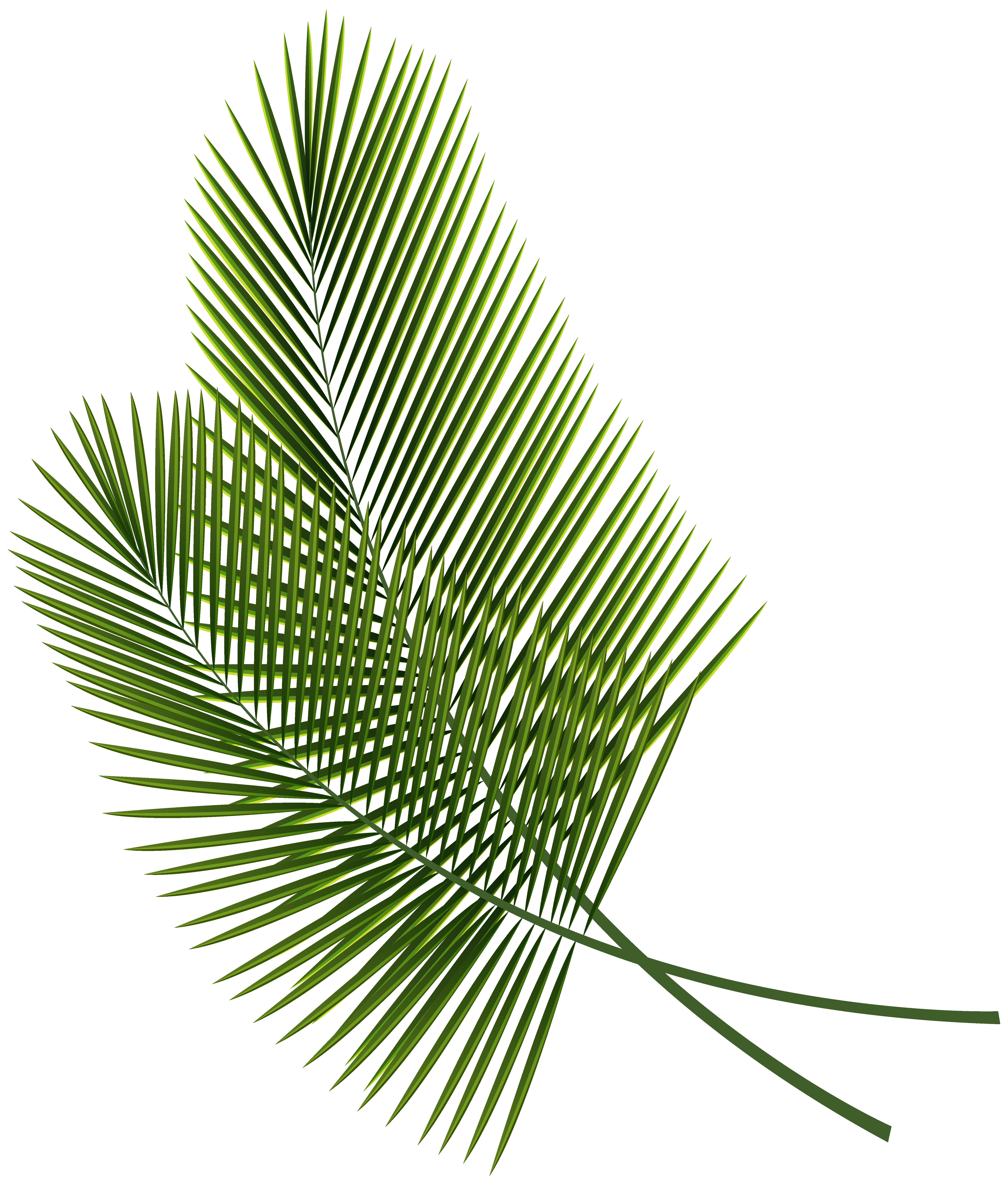 Plant clipart tropical plant, Plant tropical plant ...