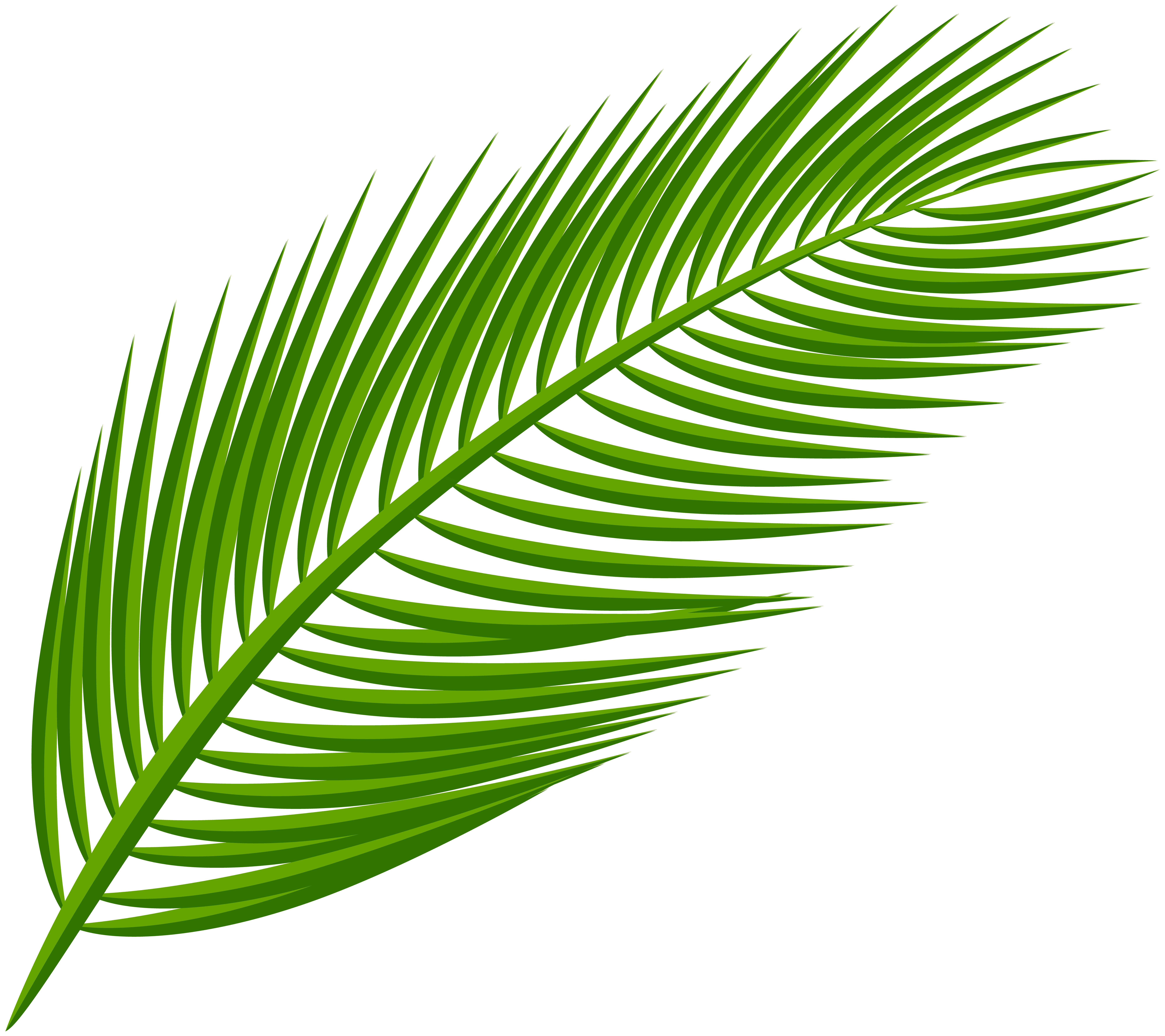 Leaves Clipart Palm Leaves Leaves Palm Leaves Transparent Free For Download On Webstockreview 2021 To get more templates about posters. webstockreview