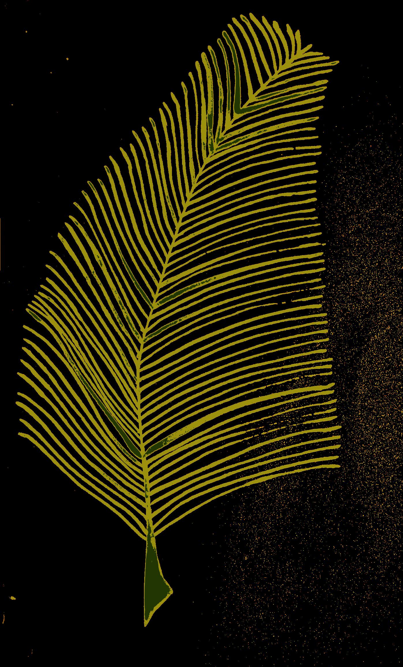 Leaf clipart twig. Calligraphic illustration plant big