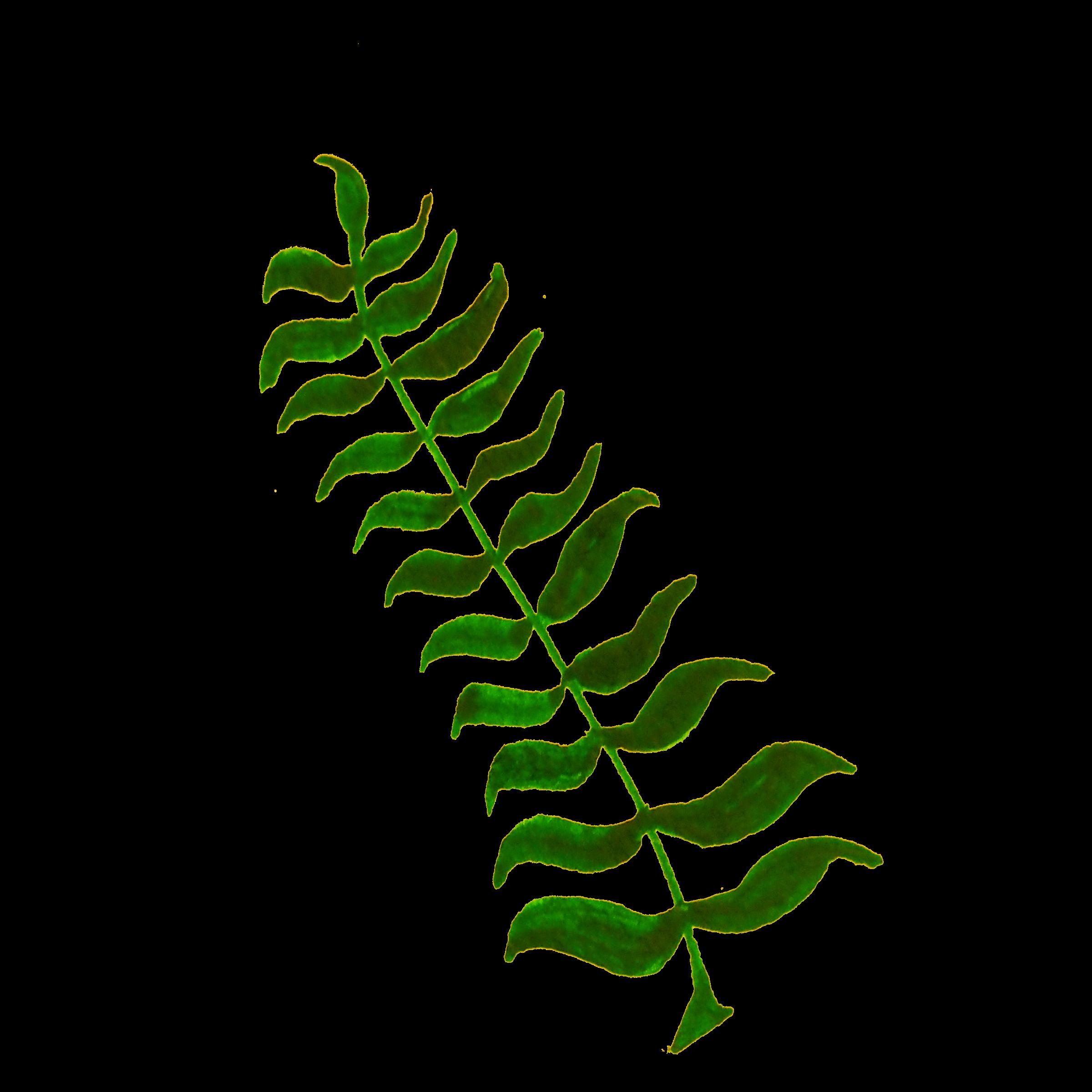 Calligraphic illustration plant big. Leaf clipart twig