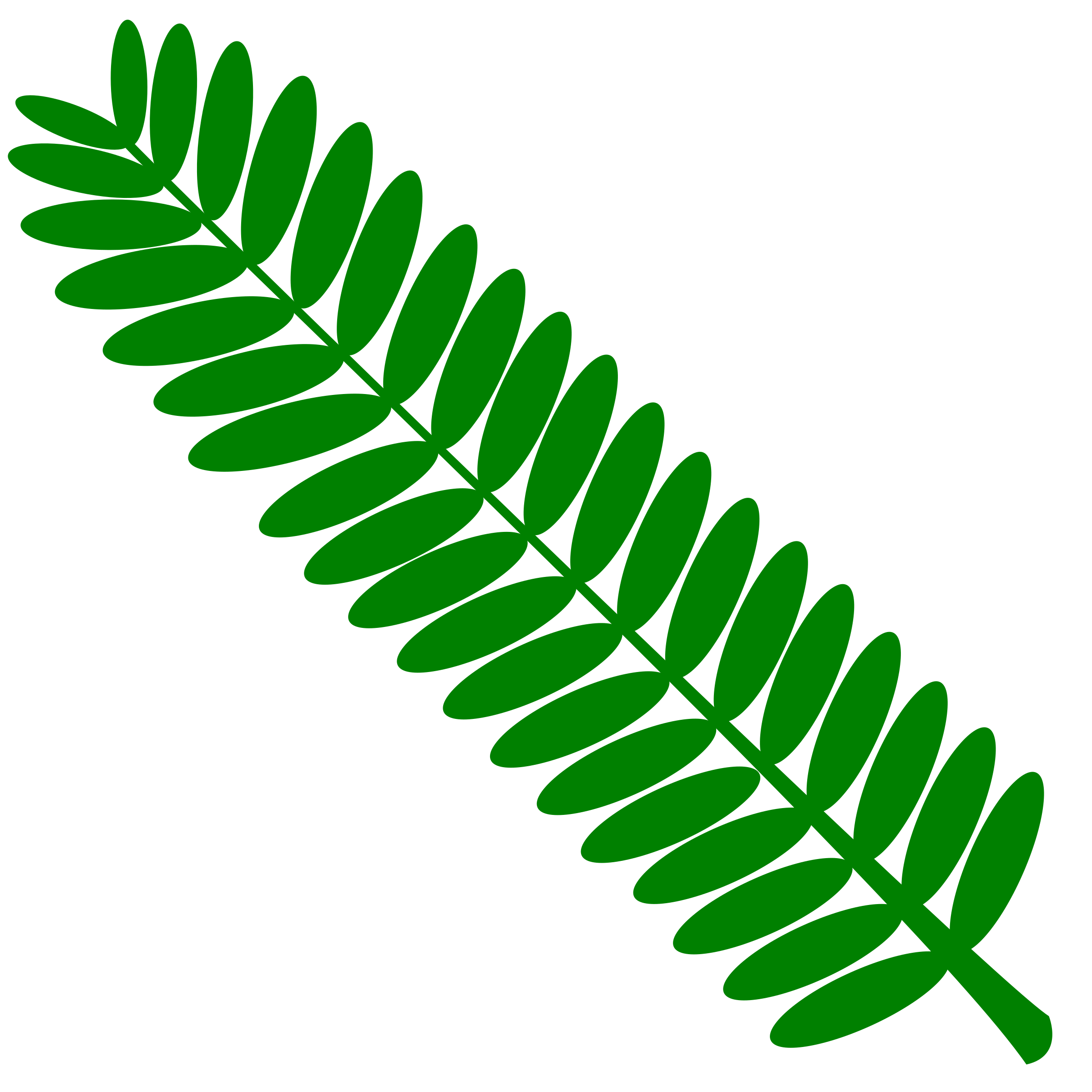 Leaf clipart twig. Mimosa touch me not