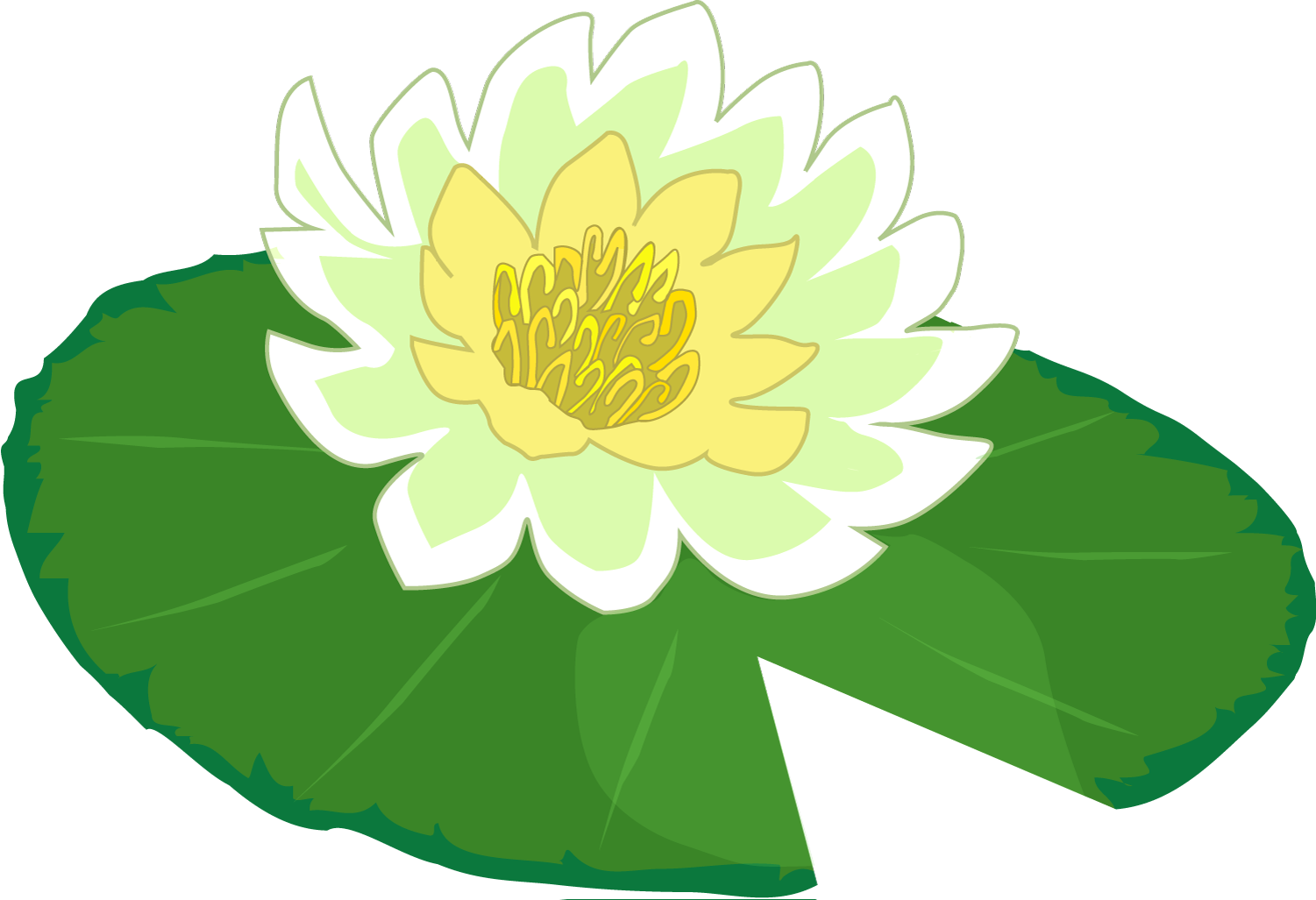 collection of water. Lily clipart waterlilly