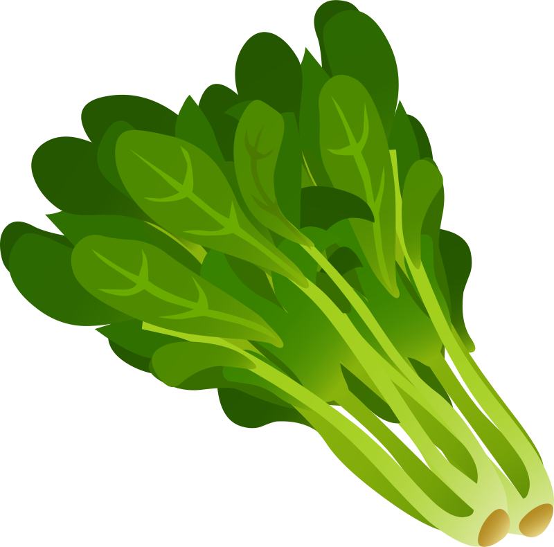 collection of spinach. Clipart vegetables green vegetable
