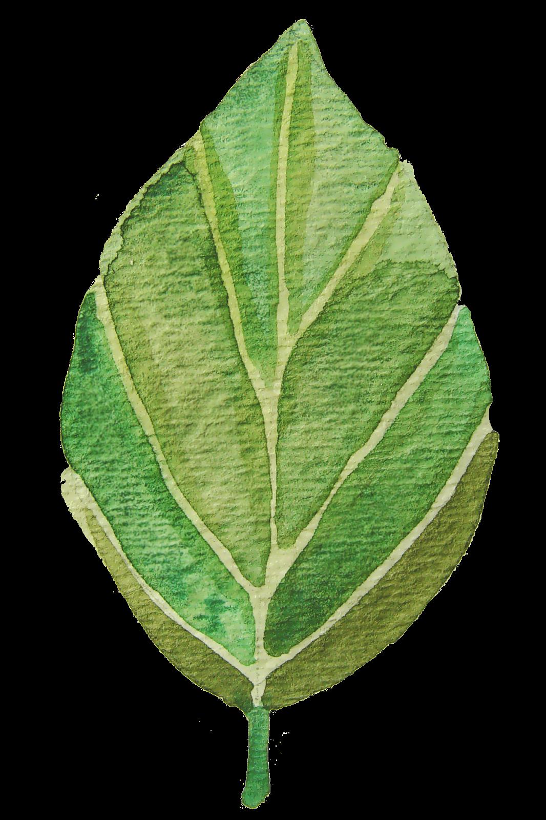 Tree clipart watercolor. Leaf green scrapbook pesquisa