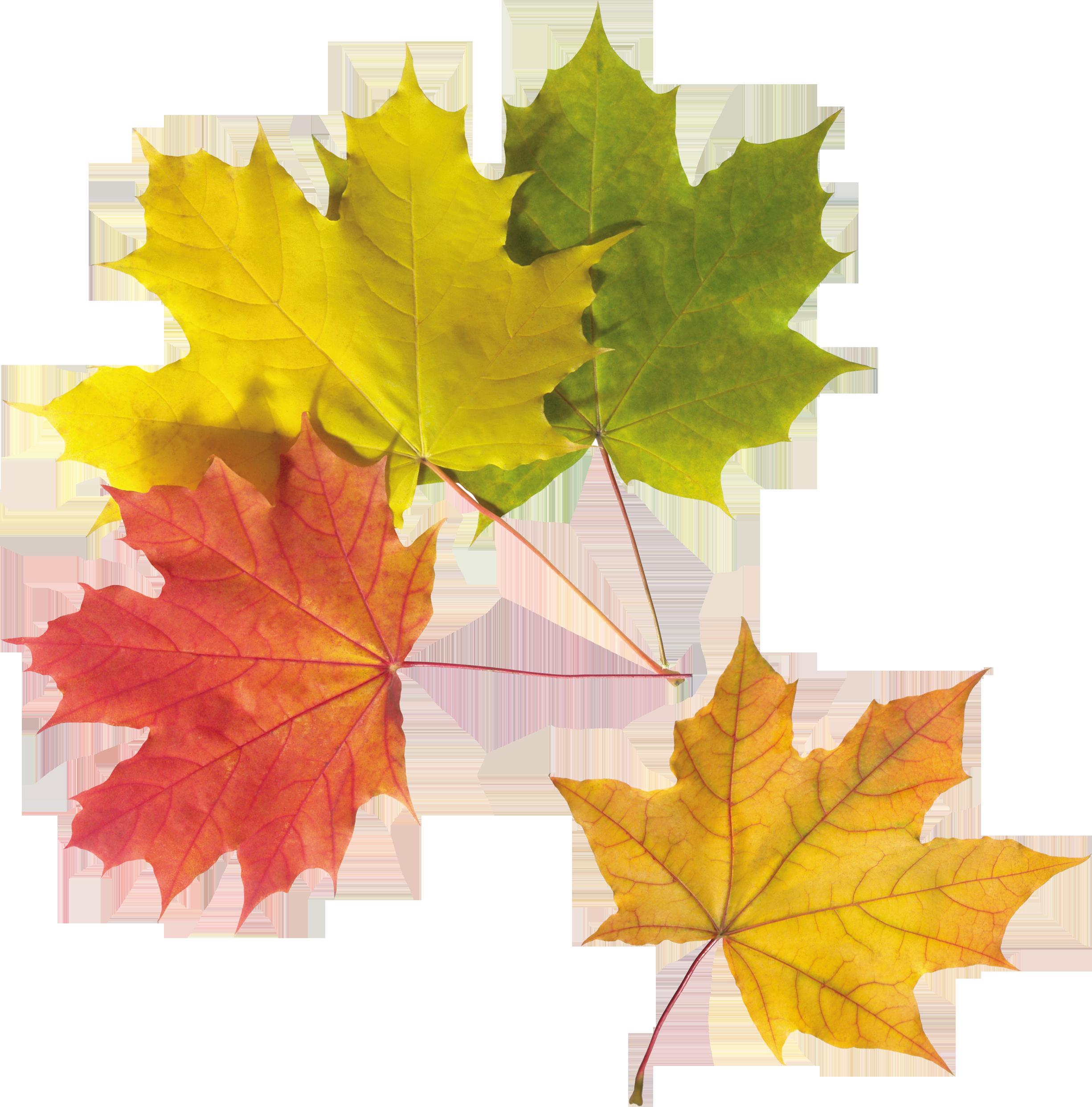 Leaves four isolated stock. Clipart park autumn sky