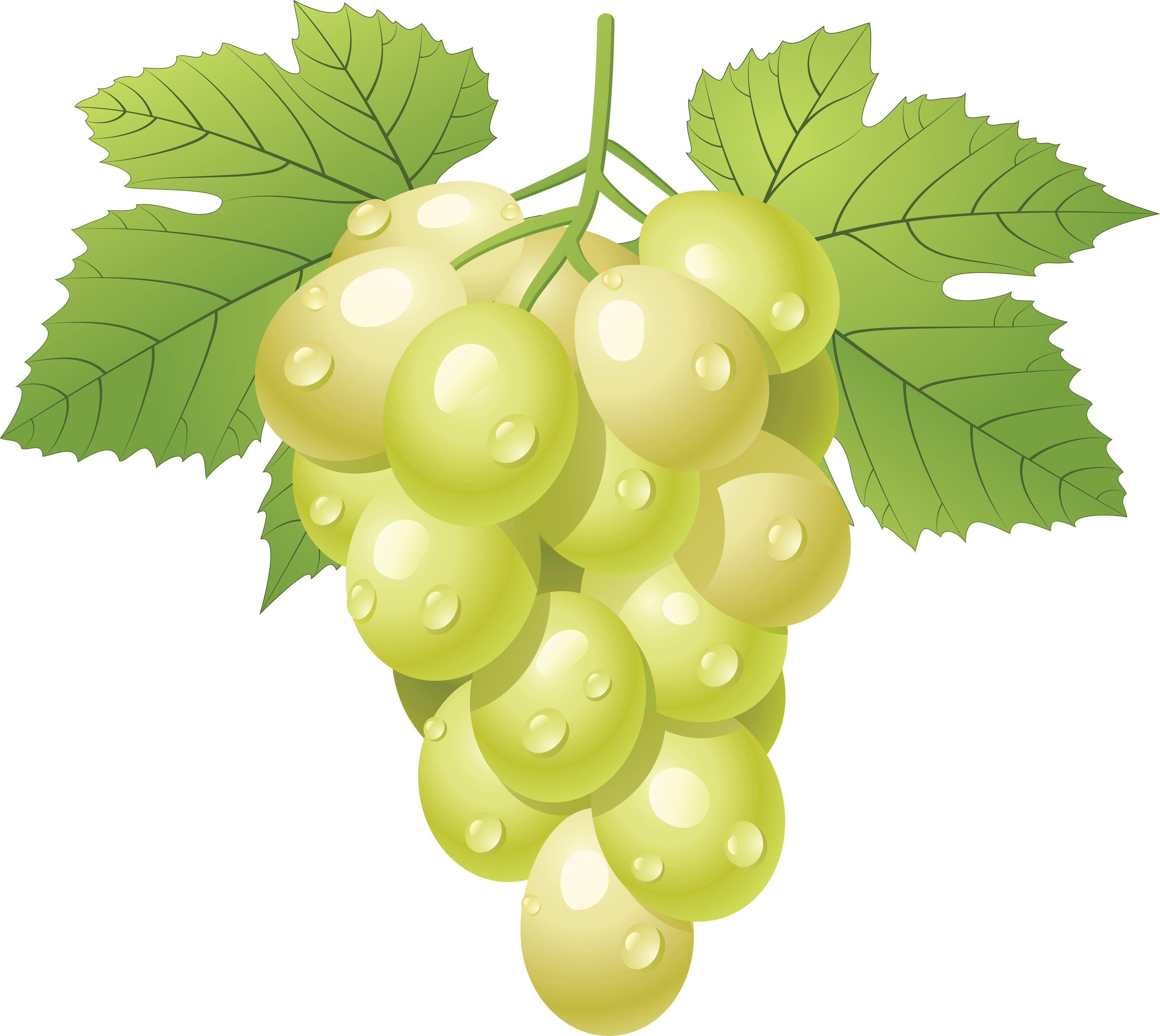Grapes clipart cartoon.  collection of green
