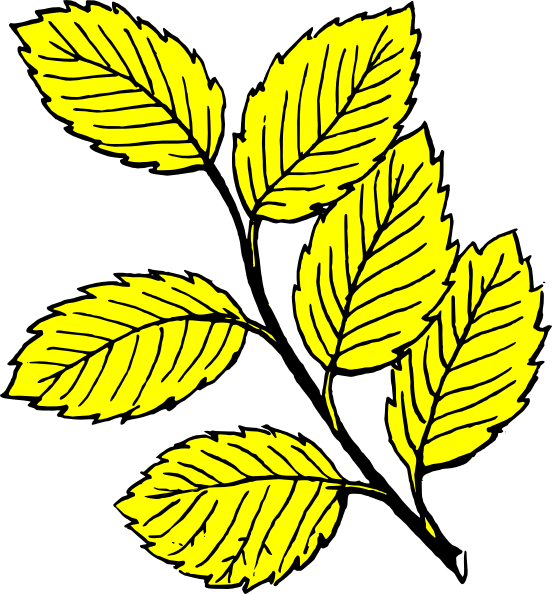 Yellow birch on dumielauxepices. Free clipart leaf