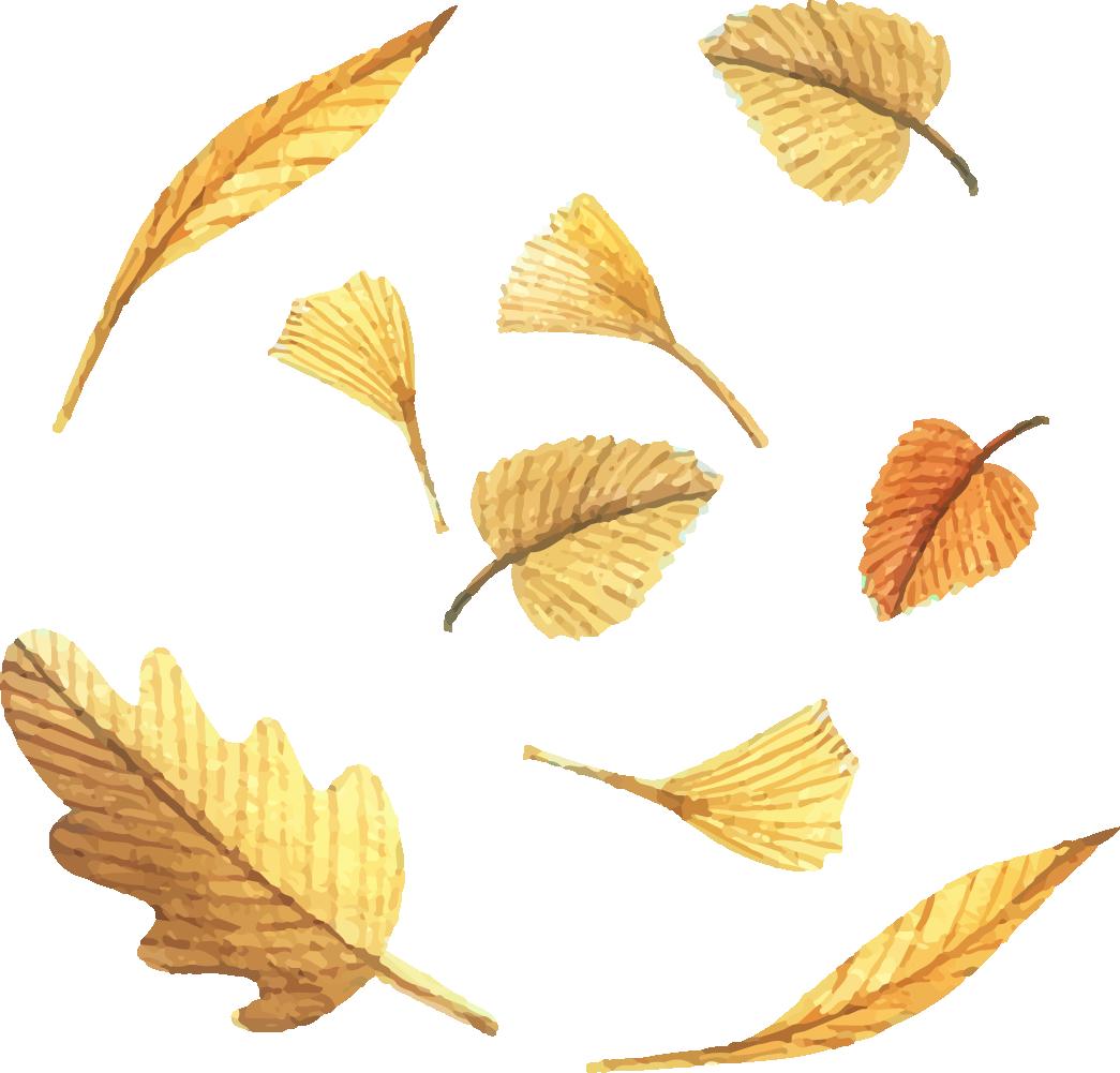 Leaf euclidean deciduous painted. Swamp clipart vector
