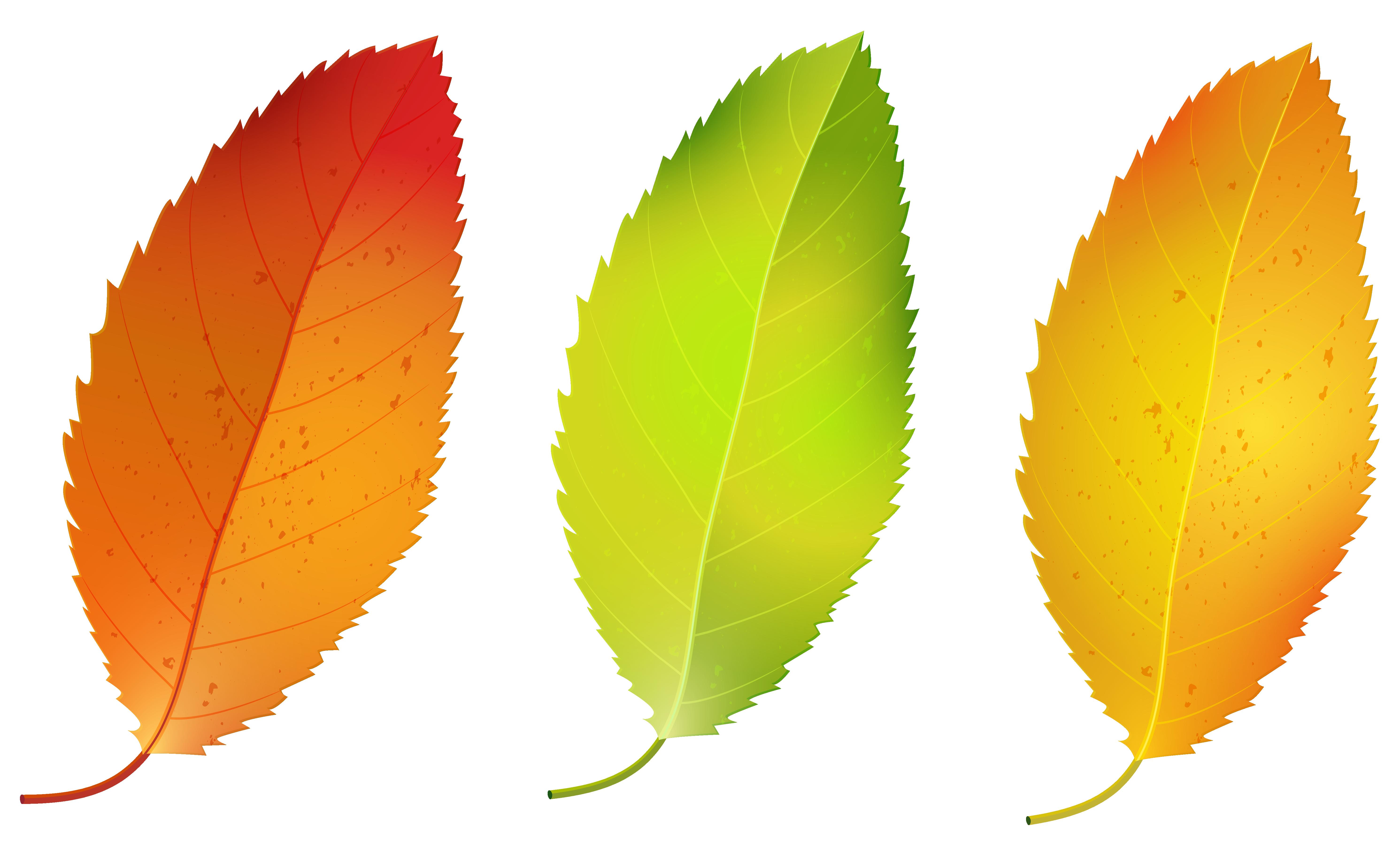 Three fall leaves set. Leaf clipart birch tree
