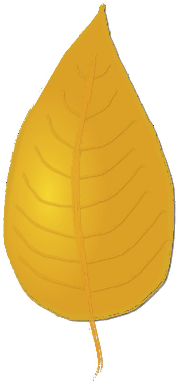 Leaf yellow birch