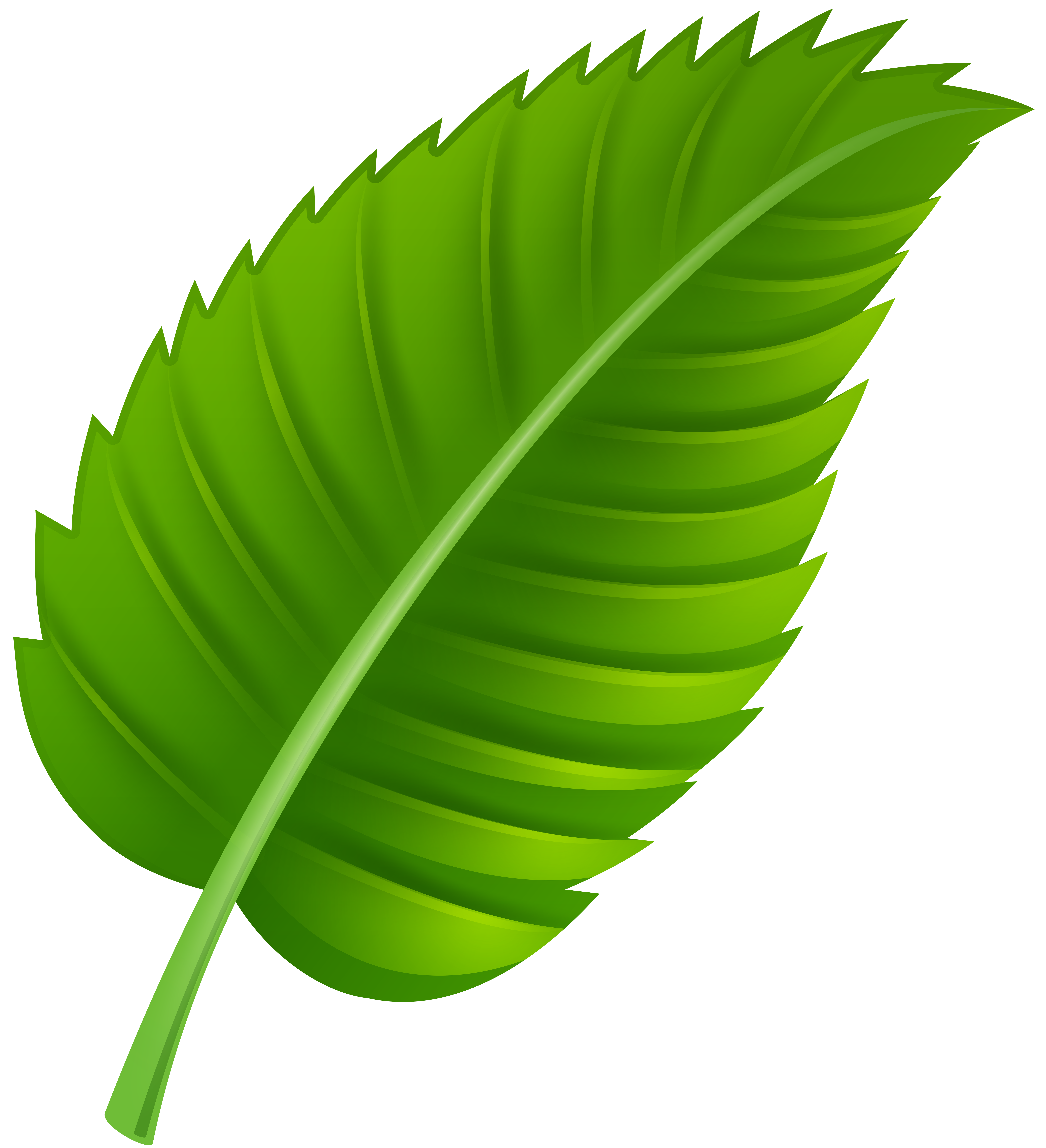 Green leaf png clip. Clipart leaves