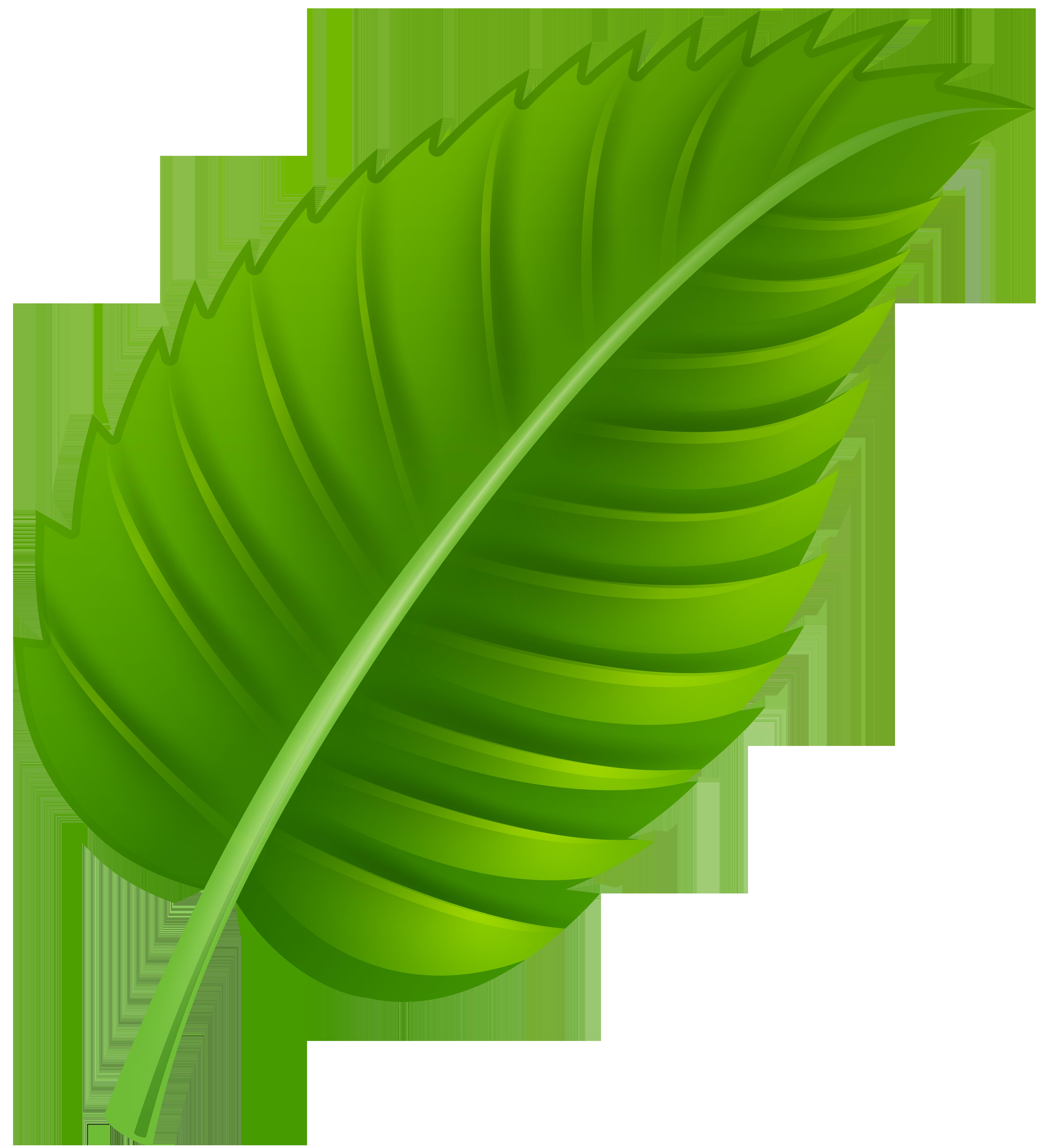 Green leaf png clip. Fern clipart daun