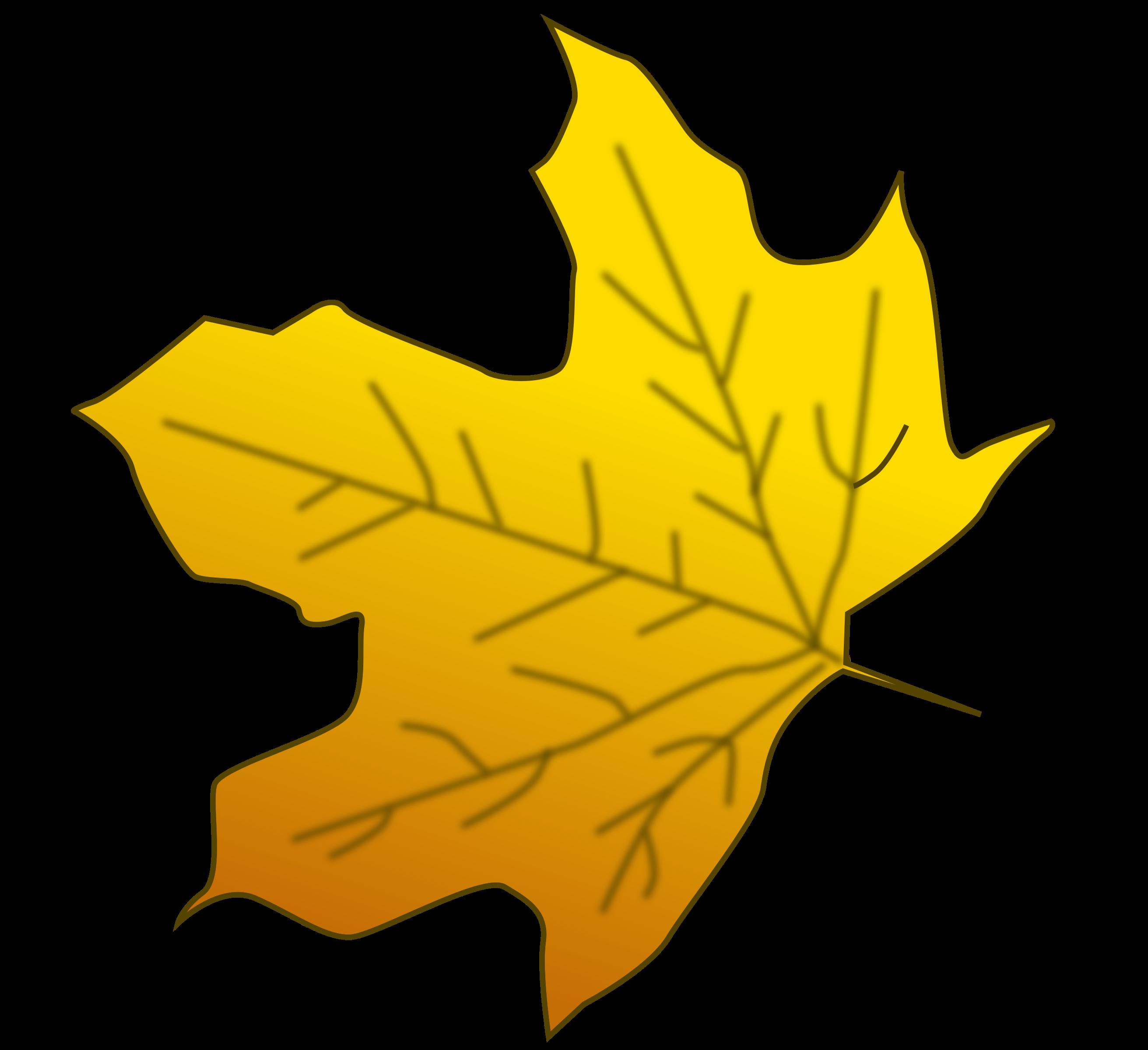 Leaves large leave