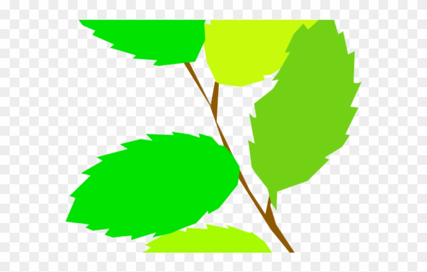 Leaves clipart 5 leave. Green png download