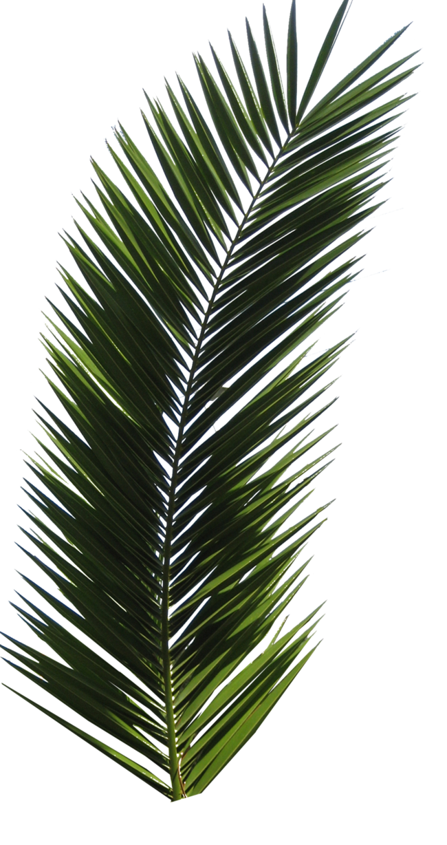 Palm clipart bunch. Tree tube stock vi