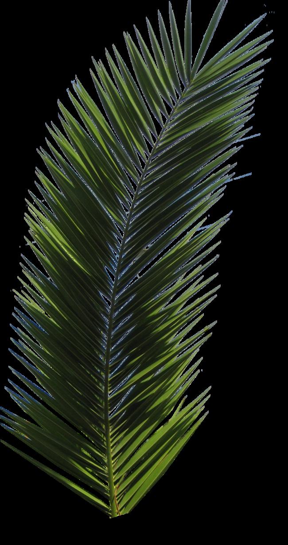 Palm tree tube stock. Fern clipart jungle