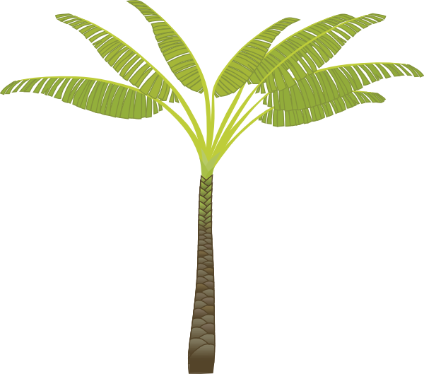 Image of banana tree. Clipart trees buko