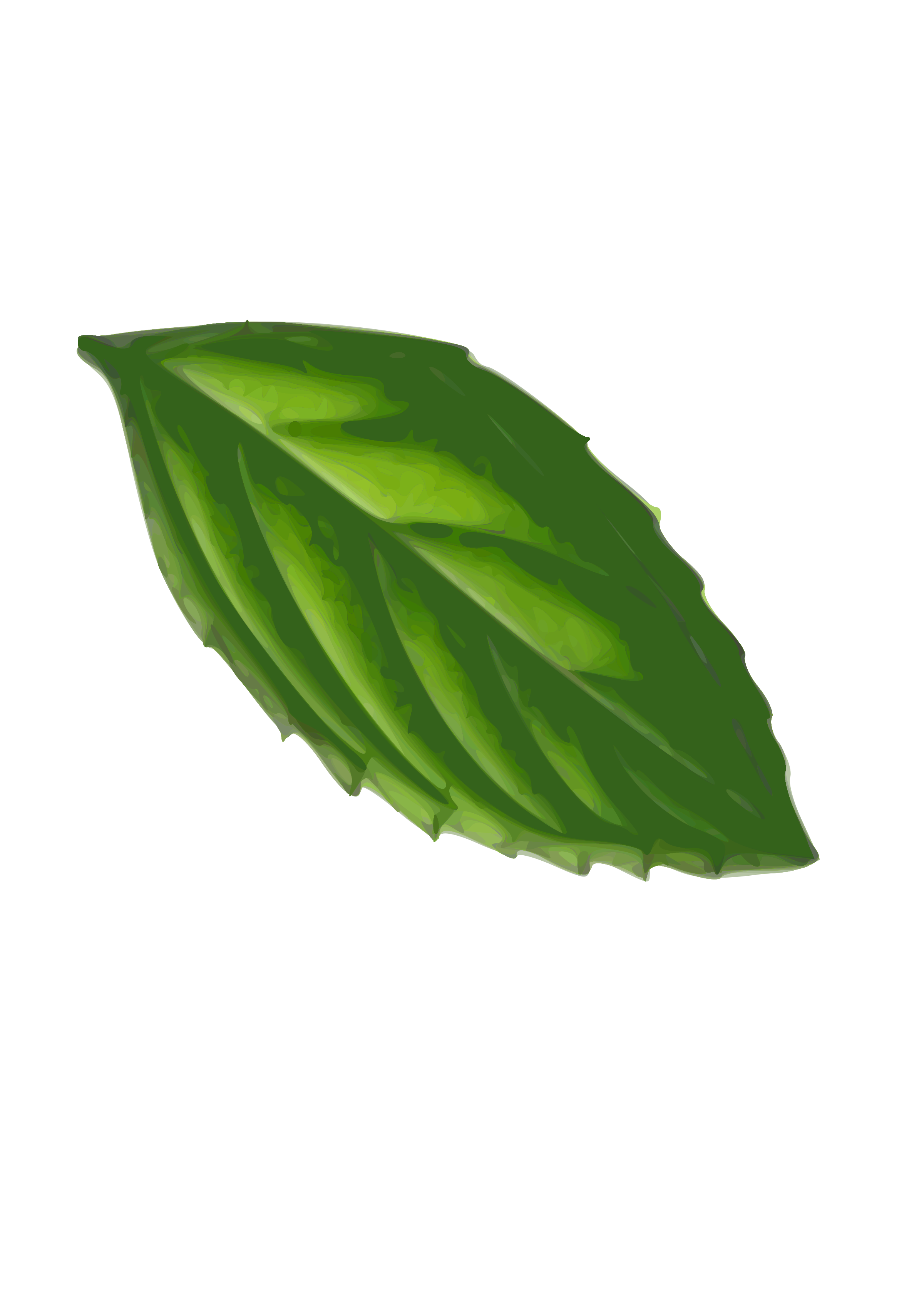 Mint leaf drawing at. Plant clipart herb
