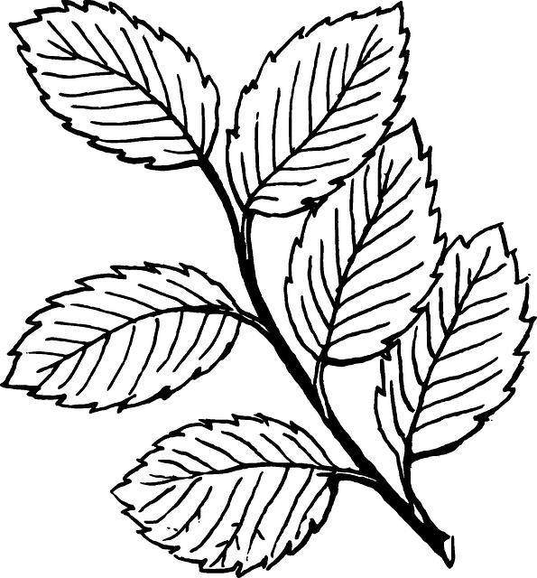 Clipart roses leaf. Free image on pixabay