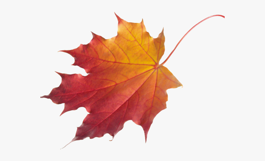 Clipart leaves chinar leaf, Clipart leaves chinar leaf ...