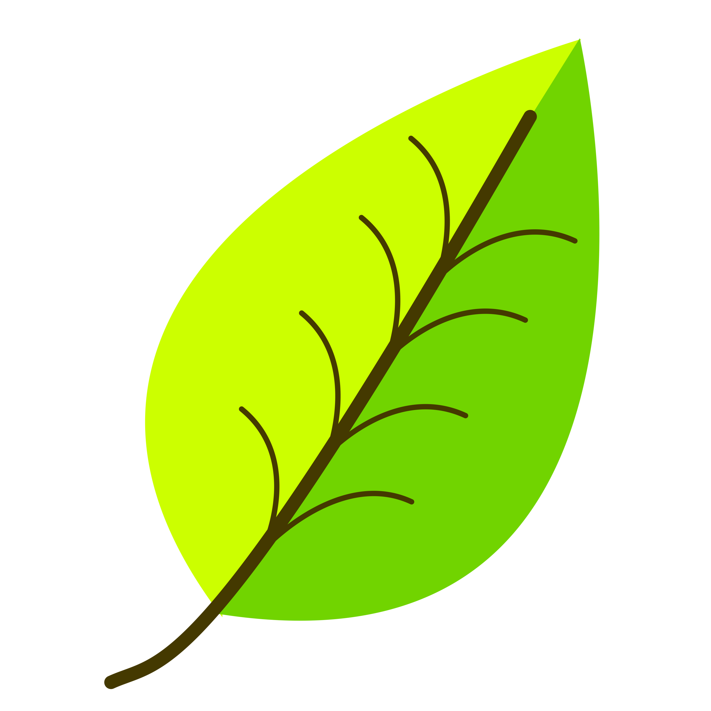 Leaf with venation two. Clipart leaves color