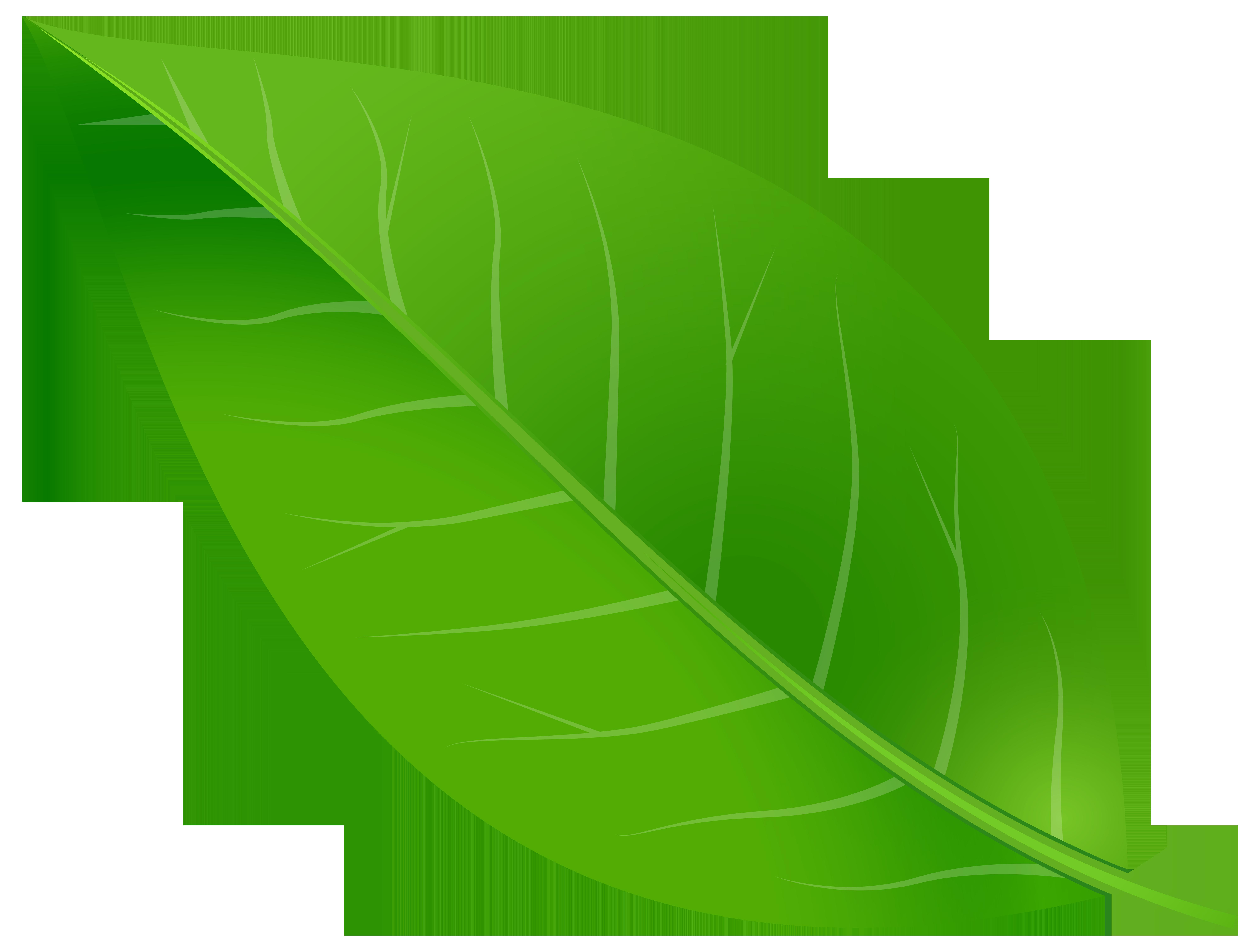Leaf clip art green. Clipart leaves color