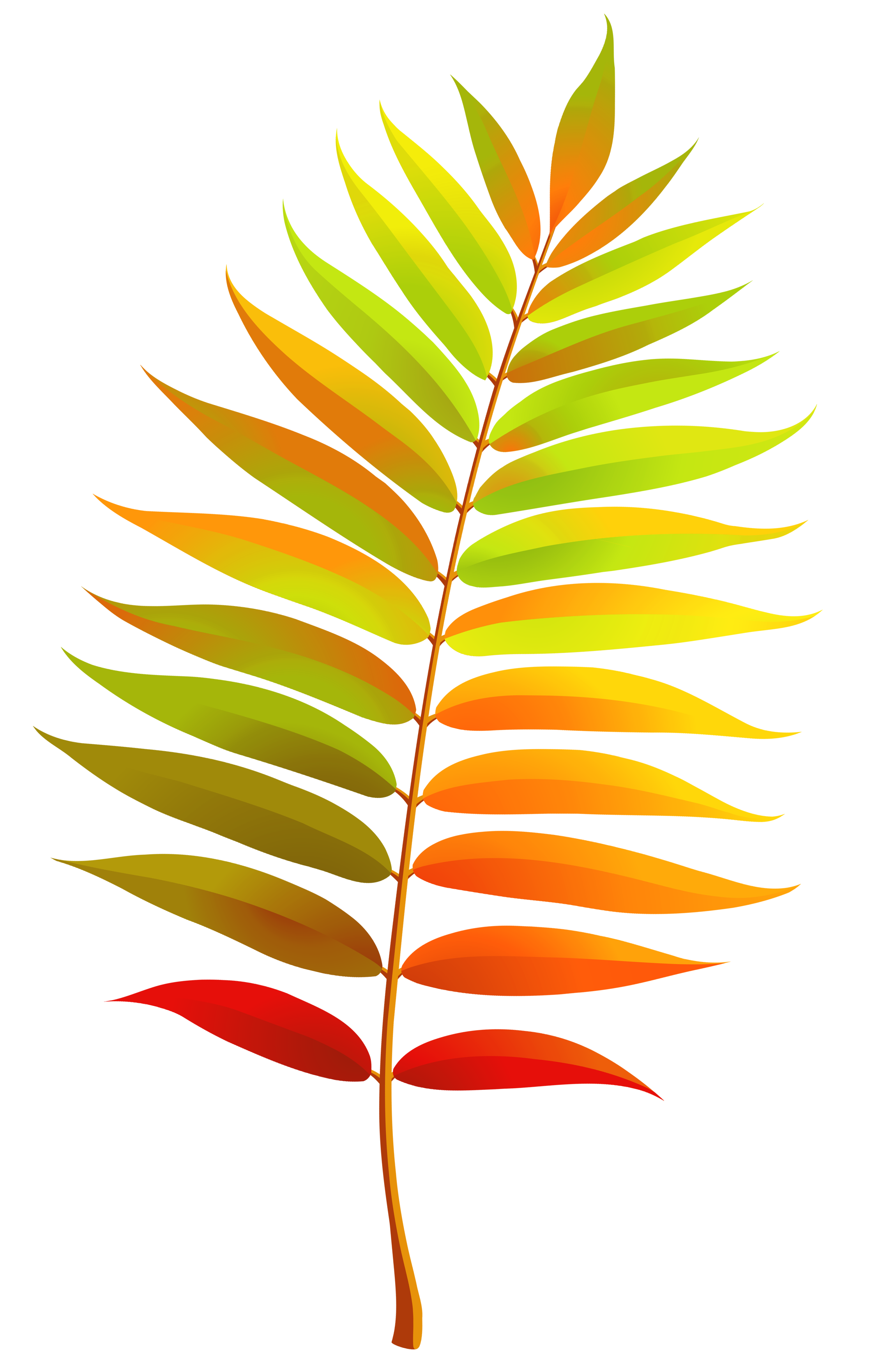 Leaf clipart transparent background.  collection of clip