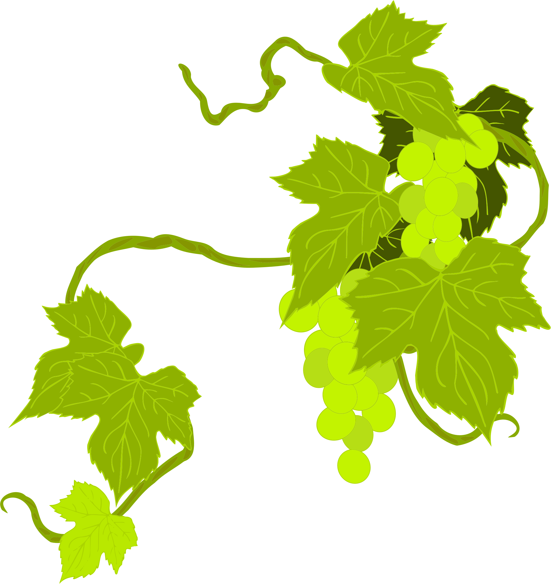 Big image png. Grapes clipart illustration