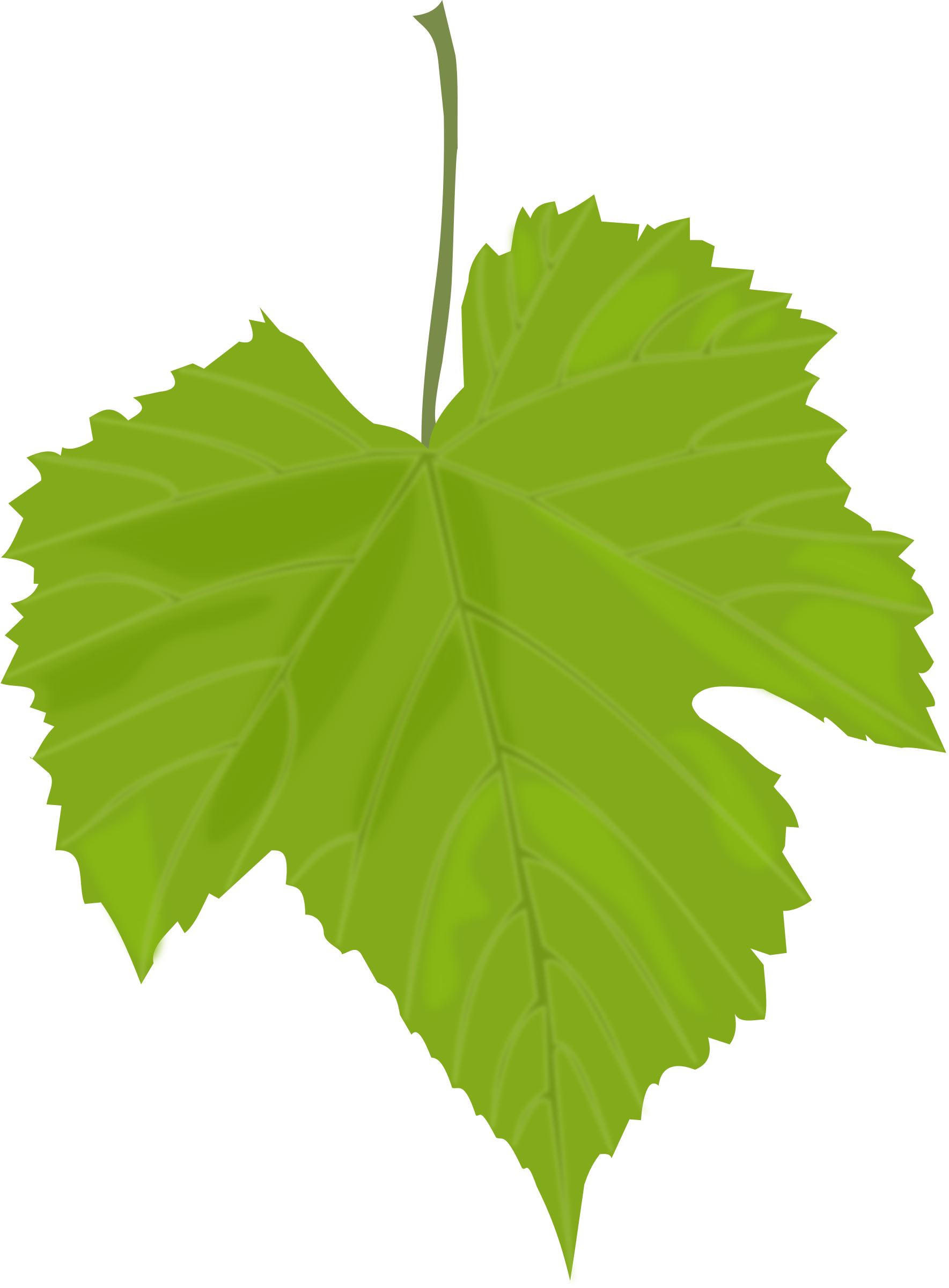 Grape leaf big image. Grapes clipart leaves