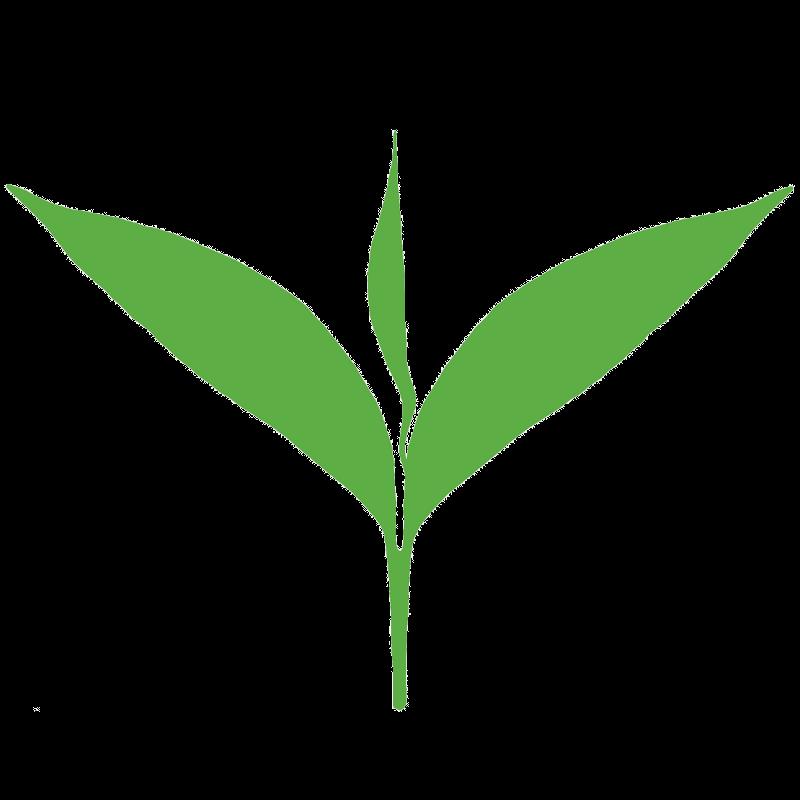 Clipart leaves green tea leaf. Tealeaf acur lunamedia co